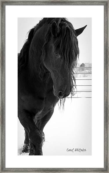 Stallion Essence Framed Print