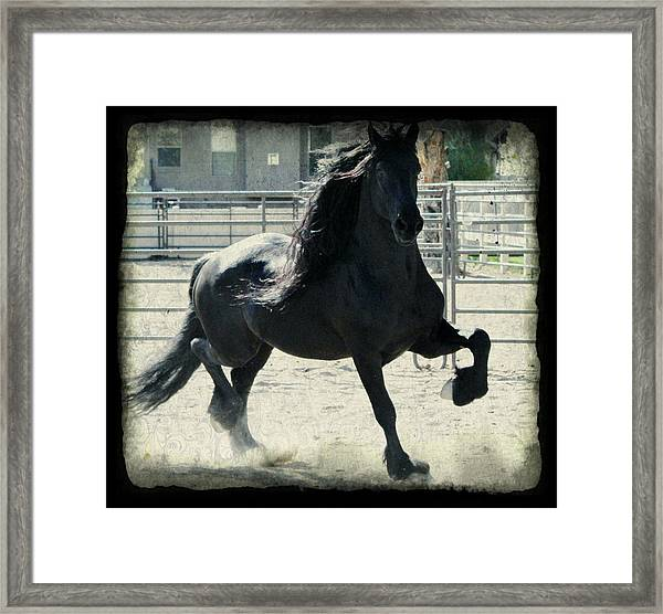 Stallion In Motion Framed Print