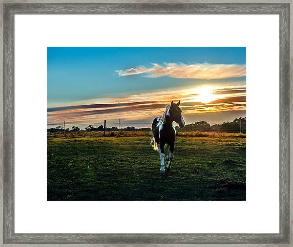 Stallion Sunset Framed Print