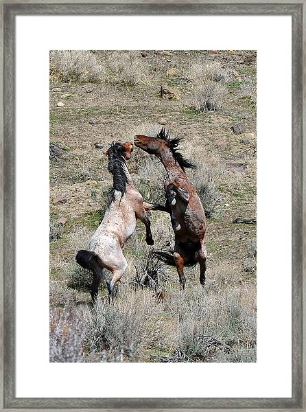 Stand And Fight Framed Print