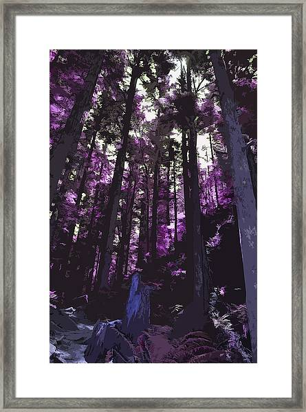 Stand Of Trees Framed Print