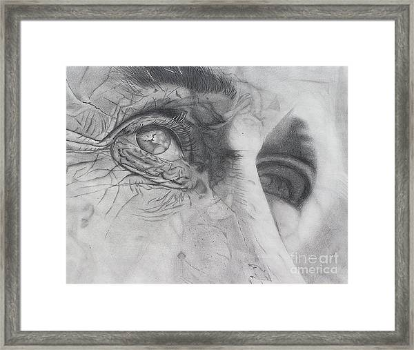 Stand Still And See Framed Print