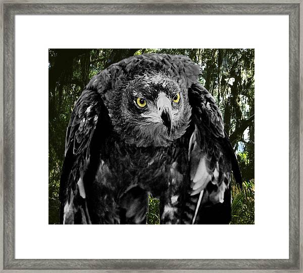 Standing Eagle Framed Print by Fred Leavitt