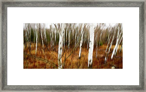 Standing Firm II Framed Print