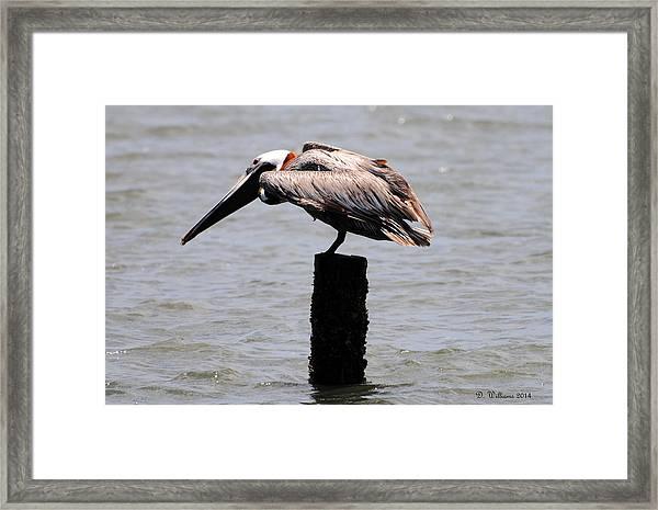 Standing On One Leg Framed Print