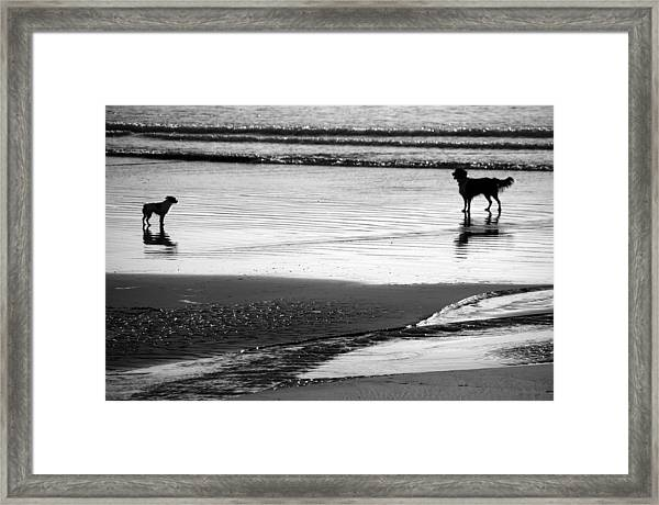 Standoff At The Beach Framed Print