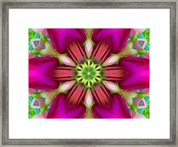 Star Fuchsia 3 Mandala Framed Print
