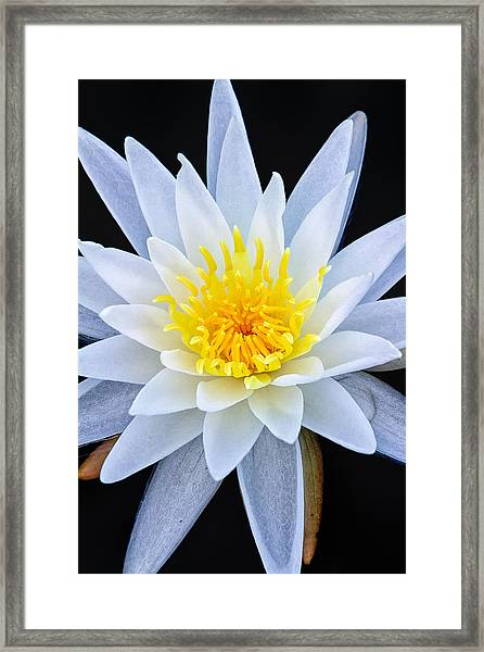 Star On The Water Framed Print