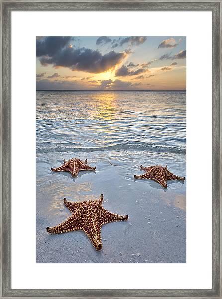Starfish Beach Sunset Framed Print