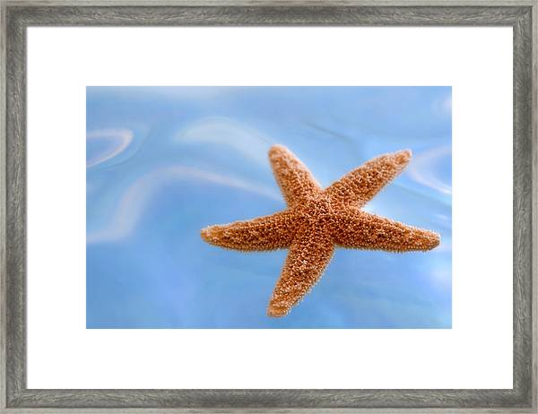 Starfish On Blue Water Framed Print