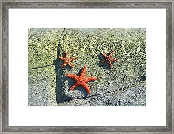 Starfish On The Rocks Framed Print