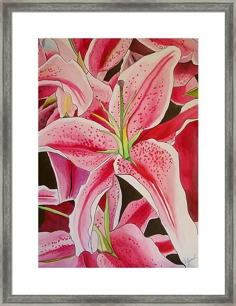 Stargazer Lily Framed Print by Sacha Grossel