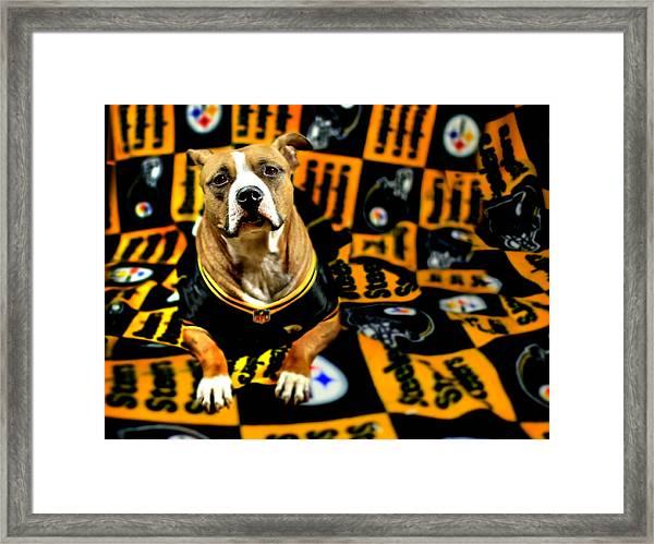 Pitbull Rescue Dog Football Fanatic Framed Print