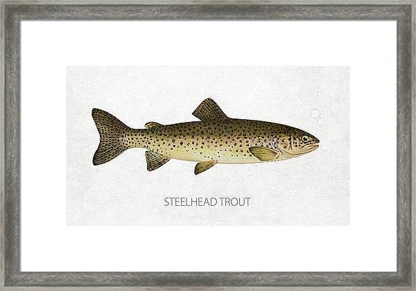 Steelhead Trout Framed Print