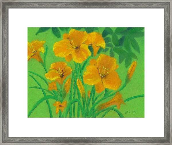 Stella De Oro Framed Print
