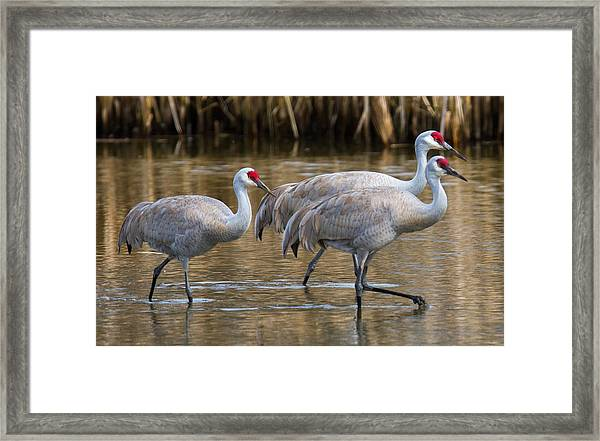 Framed Print featuring the photograph Steppin Out by Randy Hall