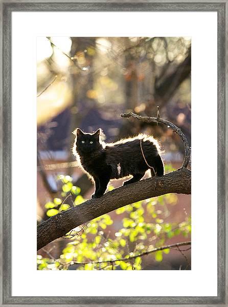 Sterling Framed Print