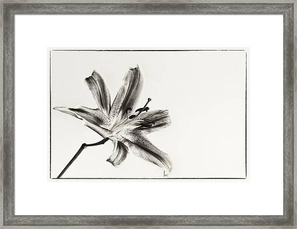 Still Beauty Framed Print
