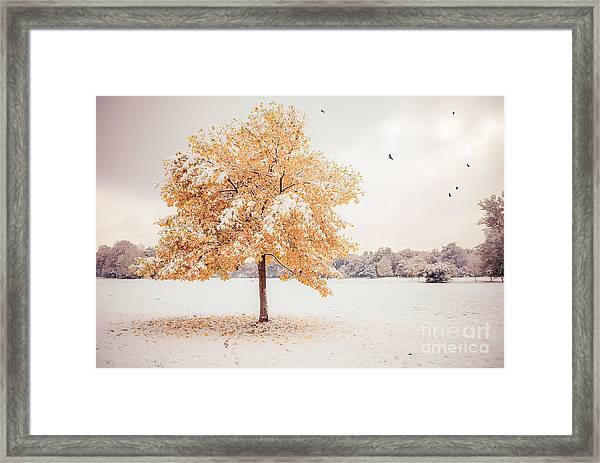 Still Dressed In Fall Framed Print