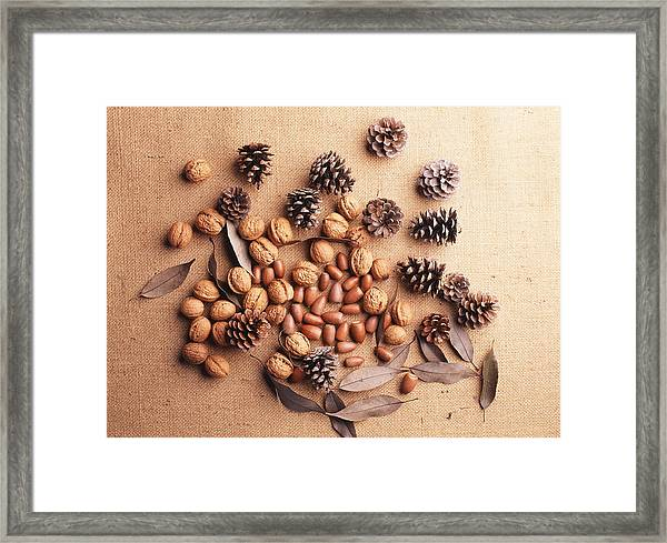 Still Life Of Pine Cones, Walnuts And Acorns Framed Print by GYRO PHOTOGRAPHY/amanaimagesRF