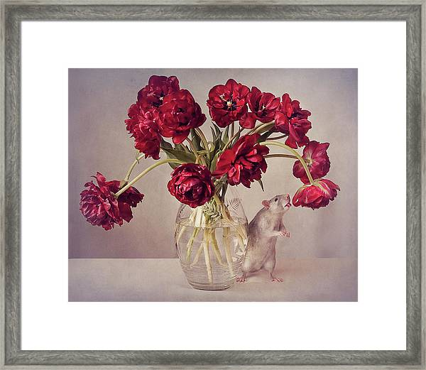 Still Life With Tulips :) (expensive Vase.....uploaded For The Weekly Theme expensive Framed Print