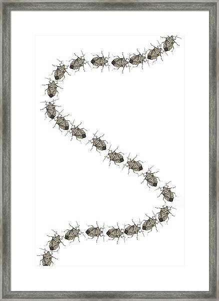 Stink Bugs I Phone Case Framed Print