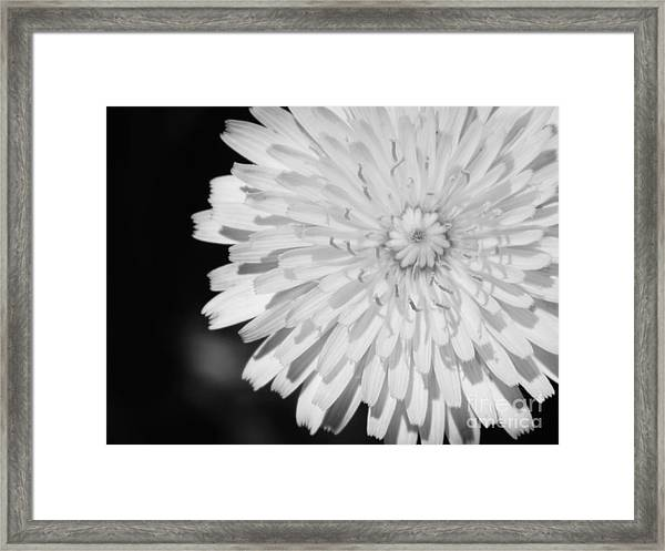 Stop Staring At Me Framed Print