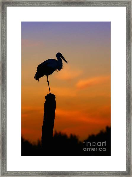 Storck In Silhouette High On A Pole Framed Print
