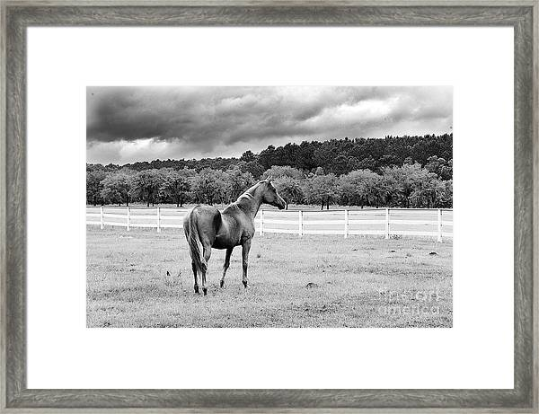 Stormy Pasture Framed Print