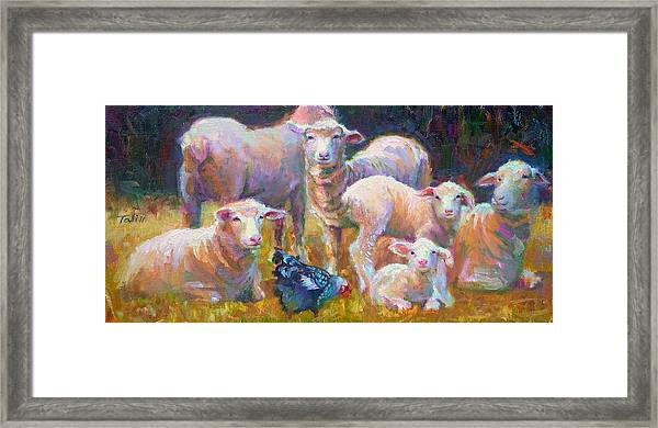Stranger At The Well - Spring Lambs Sheep And Hen Framed Print