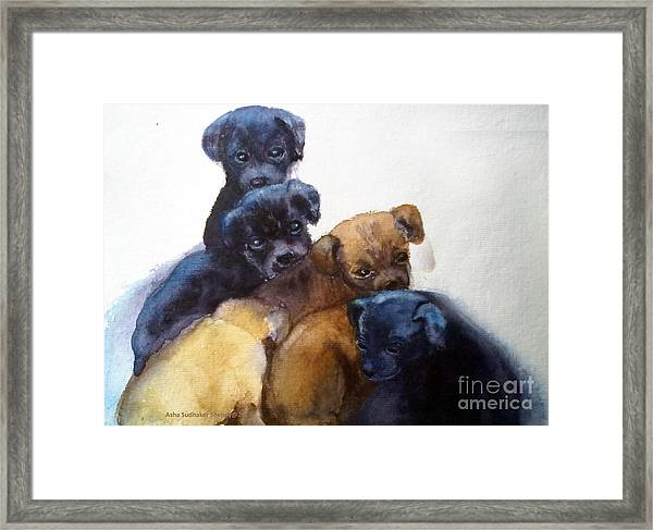 Stray Puppies Framed Print
