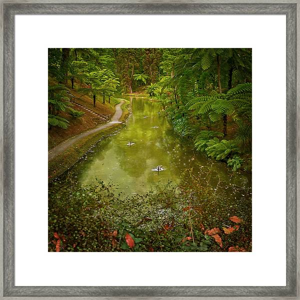 Stream In Paradise Framed Print