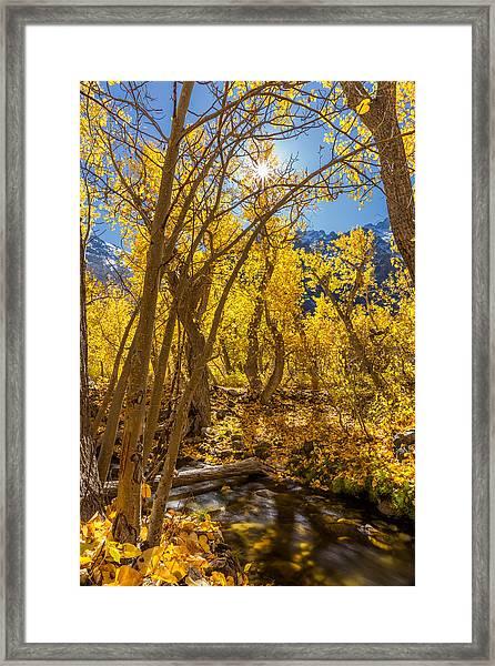 Streams Of Gold Framed Print
