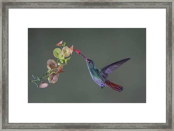 Stretch Framed Print by Greg Barsh
