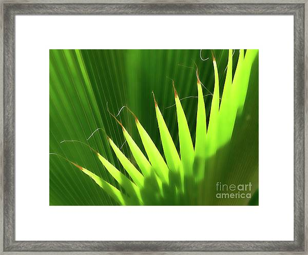 Stringy Palm Framed Print