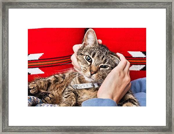 Stroking A Cat Framed Print
