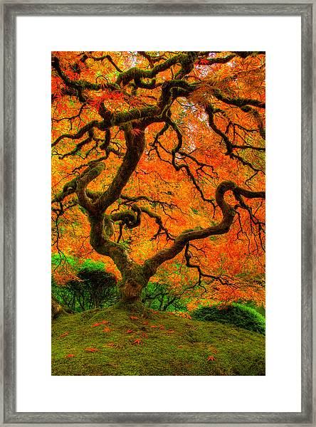 Structured Beauty Framed Print
