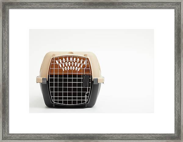 Studio Shot Of Cat Cage Framed Print
