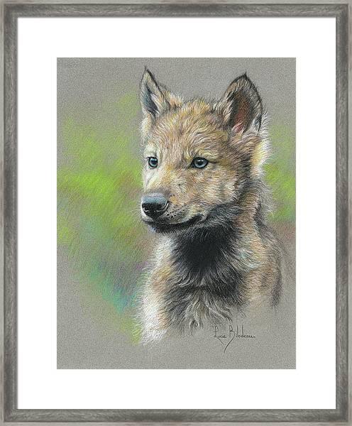 Study - Baby Wolf Framed Print
