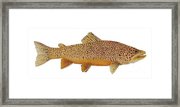 Study Of A Tiger Trout Framed Print