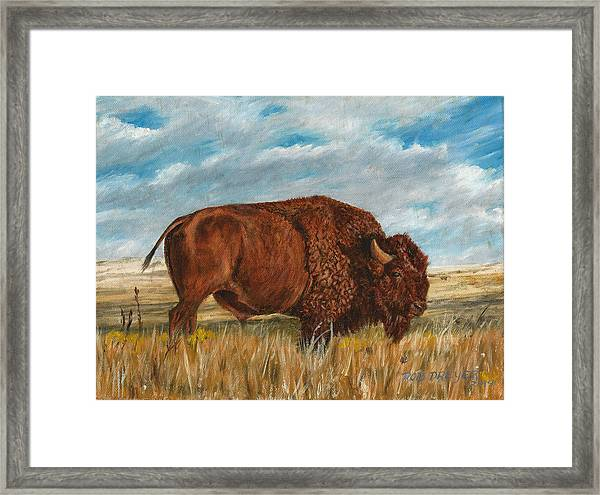 Study Of An American Bison Framed Print