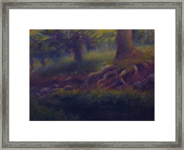 Study Of Sycamore Roots Framed Print