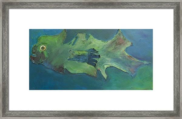 Stumpnose Framed Print