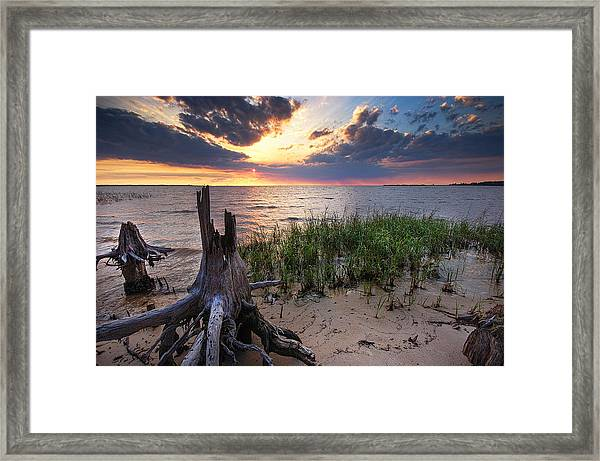 Stumps And Sunset On Oyster Bay Framed Print