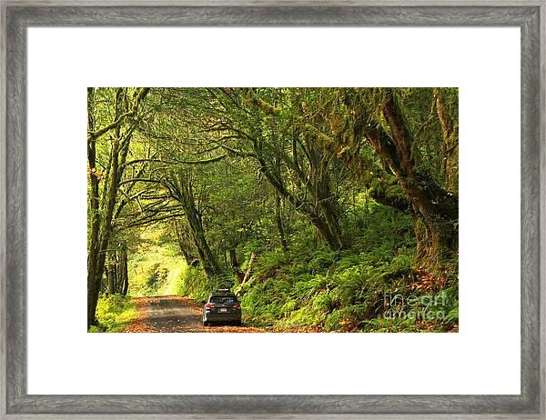 Subaru In The Rainforest Framed Print