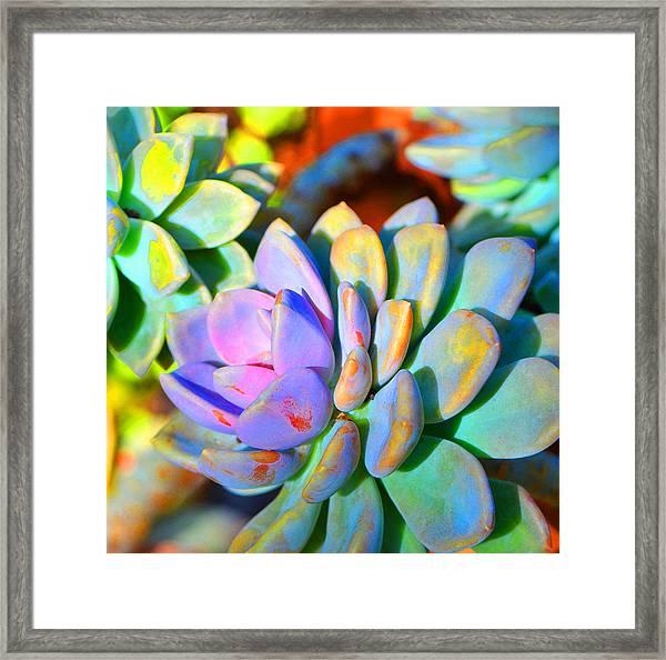 Succulent Color - Botanical Art By Sharon Cummings Framed Print