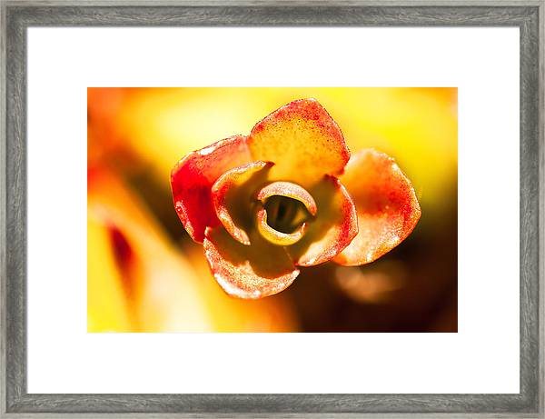 Succulent Eye Framed Print