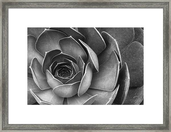 Succulent In Black And White Framed Print