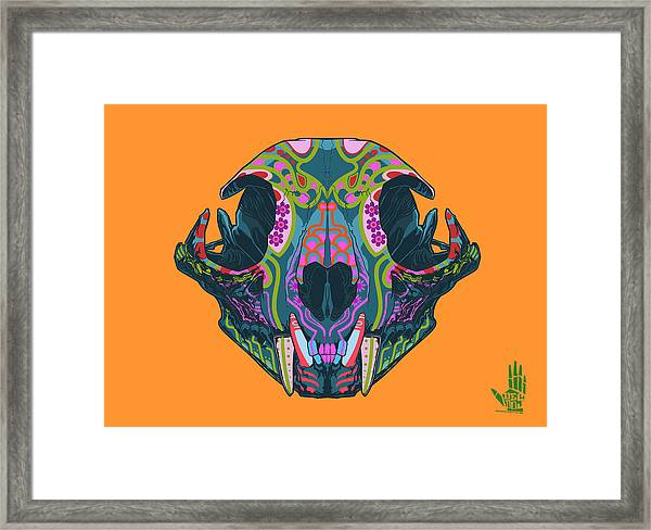 Sugar Lynx  Framed Print