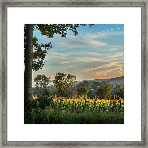 Summer Corn Square Framed Print
